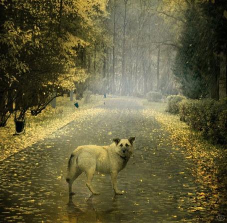 Фото Несчастный пёс под дождём