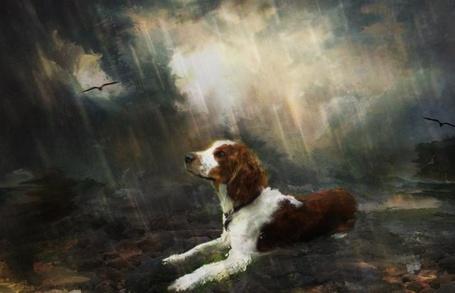 Фото Собака под дождём (© Флориссия), добавлено: 18.05.2011 22:27