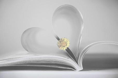 Фото Цветок в книге (© Штушка), добавлено: 22.05.2011 19:34