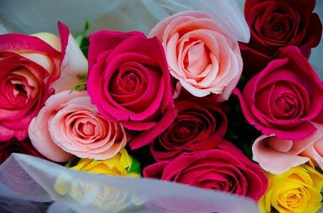 Фото Красивые розы (© Штушка), добавлено: 22.05.2011 19:43
