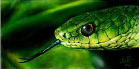 Фото Змея (© Флориссия), добавлено: 27.05.2011 19:22