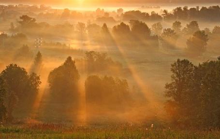 Фото Солнечные лучи озаряют поляну (© Флориссия), добавлено: 01.06.2011 13:22