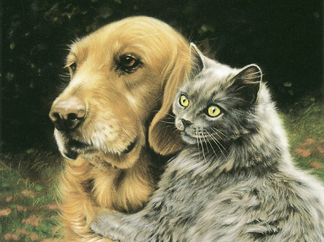 Фото Спаниель и кошка (© Штушка), добавлено: 05.06.2011 22:26