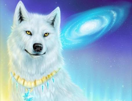 Фото Белый волк (© Флориссия), добавлено: 07.06.2011 20:42