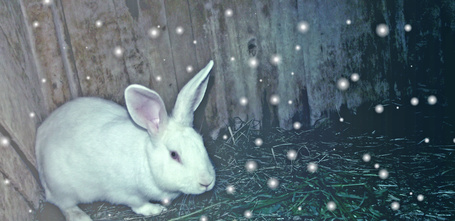 Фото Волшебный кролик (© Oridginal_ба), добавлено: 11.06.2011 16:10