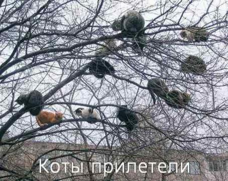 Фото Коты прилетели (© Юки-тян), добавлено: 13.06.2011 00:28