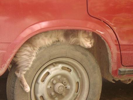 Фото Кот отдыхает на колесе (© Юки-тян), добавлено: 13.06.2011 09:34