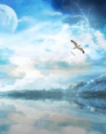 Фото Чайка летает над морем