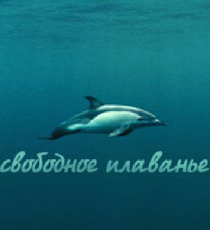 Фото Свободное плаванье (© Флориссия), добавлено: 18.06.2011 16:48