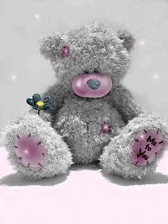 ���� ����� teddy � ������� (� ���-���), ���������: 18.06.2011 23:18