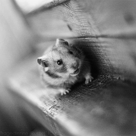 Фото Маленький смешной хомячок