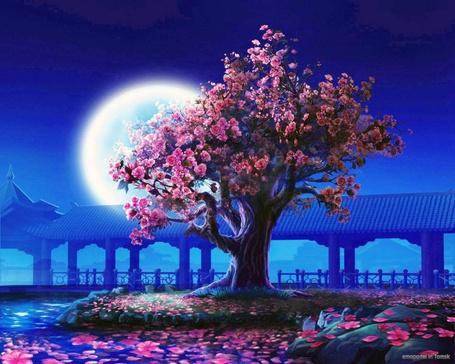 Фото Дерево в ночи (© Флориссия), добавлено: 19.06.2011 17:23