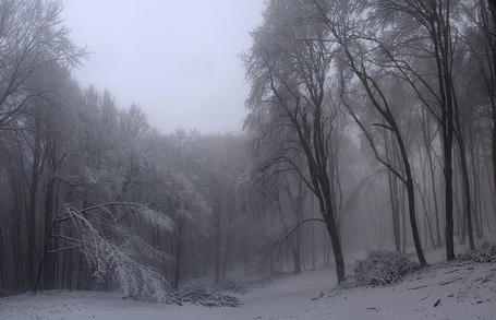 Фото Зимний лес (© Шепот_дождя), добавлено: 29.06.2011 23:21