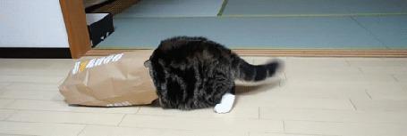 Фото Кот сидит в пакете