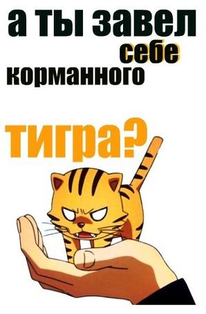 Фото Прикол по аниме ToraDora (а ты завел себе карманного тигра?)