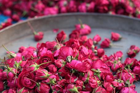 Фото Бутоны роз (© Штушка), добавлено: 15.07.2011 22:55