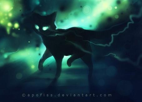 Фото Чёрный котёнок by apofiss (© Юки-тян), добавлено: 16.07.2011 09:56