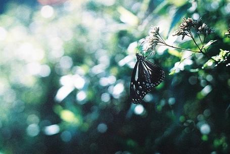 Фото Бабочка на ветке (© Штушка), добавлено: 20.07.2011 11:54