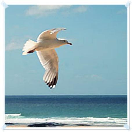 Фото Чайка летит над морем