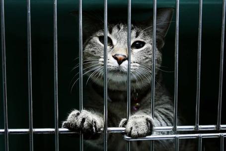Фото Милый котик за решёткой (© Volkodavsha), добавлено: 29.07.2011 18:41