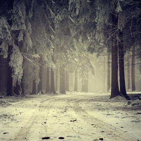 Фото Дорога в зимнем лесу (© Fenix), добавлено: 31.07.2011 19:06
