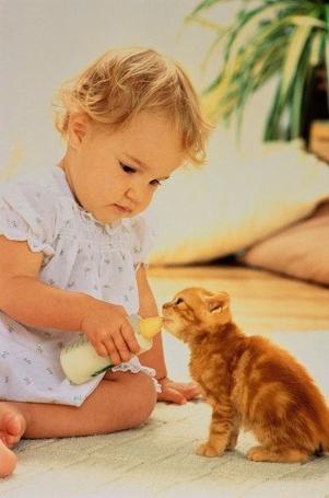Фото Девочка кормит котёнка молоком (© Юки-тян), добавлено: 31.07.2011 20:29