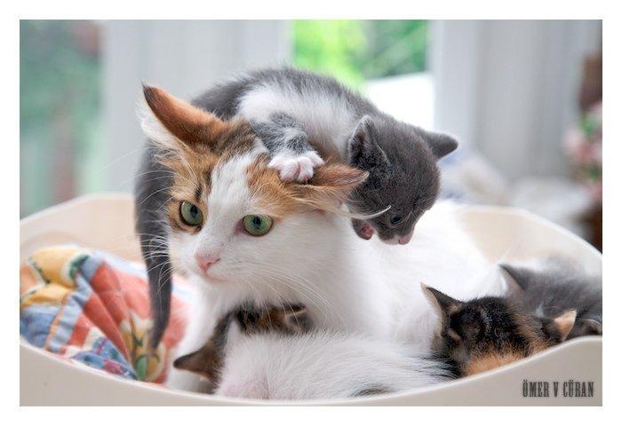 Фото Кошка с котятами