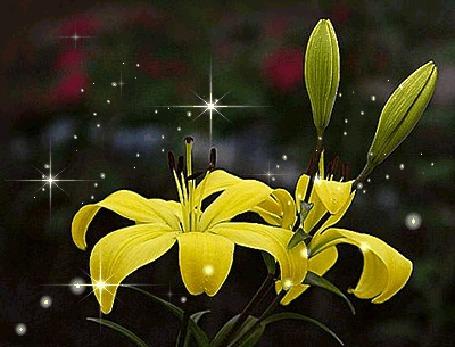 Фото Жёлтые лилии (© Штушка), добавлено: 02.08.2011 15:44