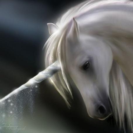 Фото Красивый белый конь