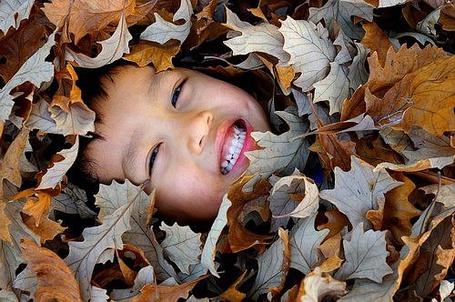 Фото Малыш среди листьев