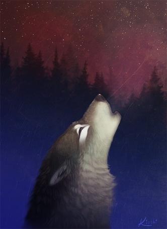 Фото Воющий волк (© Штушка), добавлено: 07.08.2011 22:52
