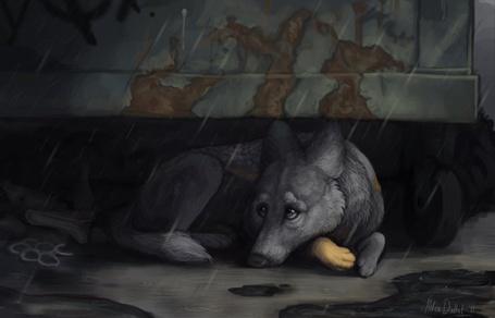 Фото Грустный волк лежит под дождём (© Штушка), добавлено: 07.08.2011 22:54