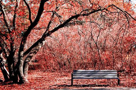 Фото Лавочка под большим деревом (© Штушка), добавлено: 14.08.2011 14:58