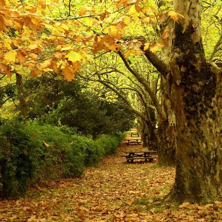 Фото Парк осенью (© Штушка), добавлено: 14.08.2011 14:59