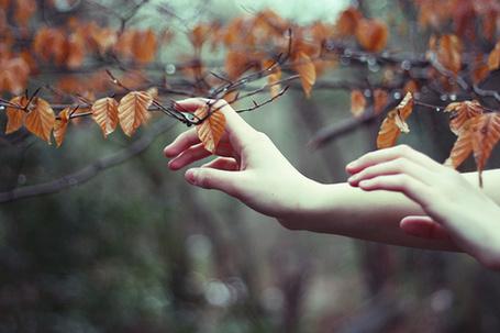 Фото Женские руки тянутся к осенней ветви (© Радистка Кэт), добавлено: 21.08.2011 16:44