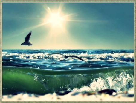 Фото Чайки летают над морем (© Флориссия), добавлено: 21.08.2011 21:21