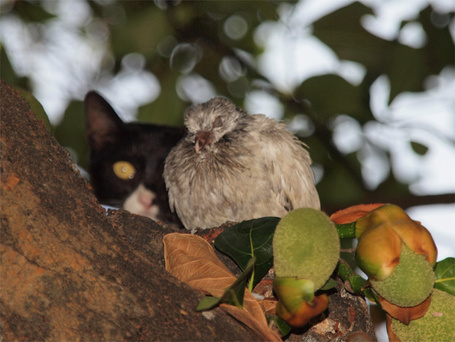 Фото Кошка наблюдает за птицей (© alcatel), добавлено: 22.08.2011 09:07