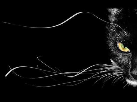 Фото Чёрный кот с жёлтыми глазами и длинными усами (© alcatel), добавлено: 22.08.2011 21:58