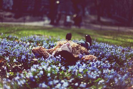 Фото Девушка лежит на лавандовой поляне (© Радистка Кэт), добавлено: 23.08.2011 01:13