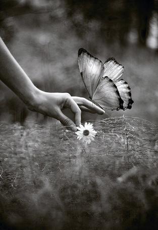 Фото Бабочка на пальцах (© Шепот_дождя), добавлено: 24.08.2011 17:15