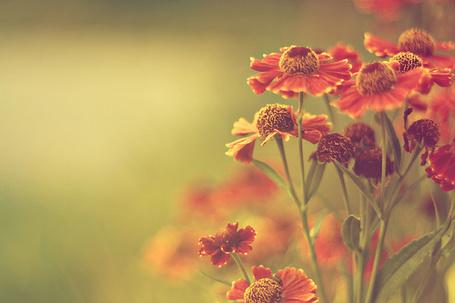Фото Полевые цветы (© Радистка Кэт), добавлено: 28.08.2011 00:44
