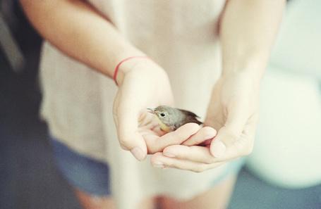 Фото Девушка держит в руках птичку (© Радистка Кэт), добавлено: 30.08.2011 00:15