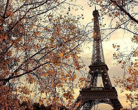 Фото Эйфелева бышня виднеется сквозь осеннюю листву (© Шепот_дождя), добавлено: 30.08.2011 18:09