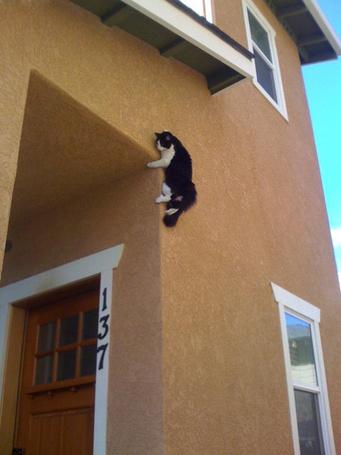 Фото Кошка на стене дома (© alcatel), добавлено: 31.08.2011 16:46
