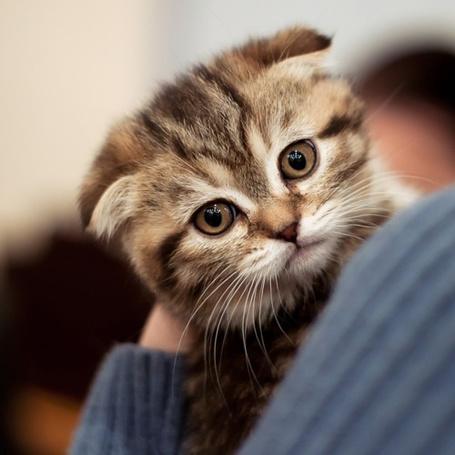 Фото Котёнок на плече (© alcatel), добавлено: 31.08.2011 16:53