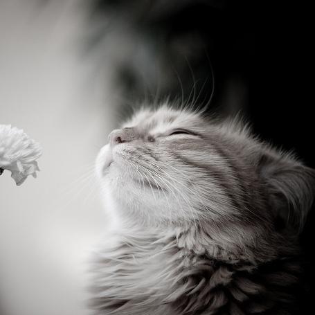 Фото Кошка и цветок