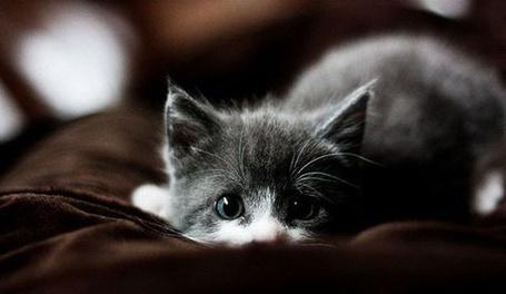 Фото Грустный котёнок (© alcatel), добавлено: 31.08.2011 23:49