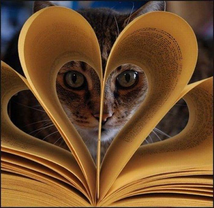 Картинки по запросу кот и книга