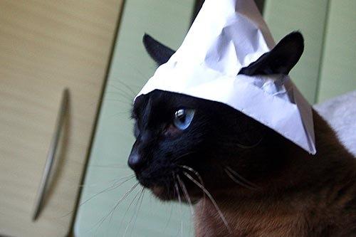 Как сделать шапку для кота видео