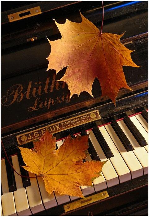 Фото Опавшие желтые листья на фортепиано